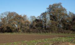Anglo Saxon Pembridge & Rowe Ditch